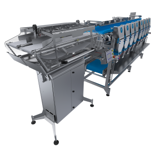WEIGHING AND CLASSIFICATION SYSTEM BY CONVEYOR